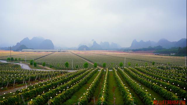 """阿里巴巴农办主任戴珊:数字引擎推动中国农业农村""""换道超车"""""""